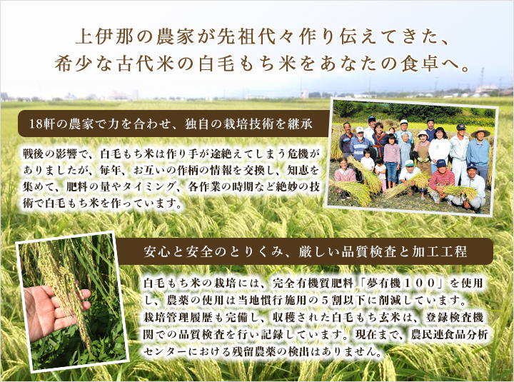上伊那の農家が先祖代々作り続けてきた白毛もち米をあなたの食卓へ